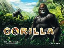 Gorilla на ставки