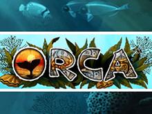 На автомате Orca ставки